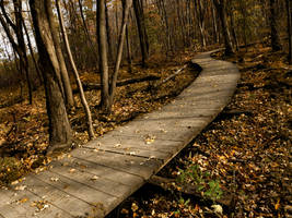 Pathway in the Autumn Forest by SEnigmaticX