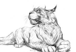 Little Feline Concept by boscopenciller
