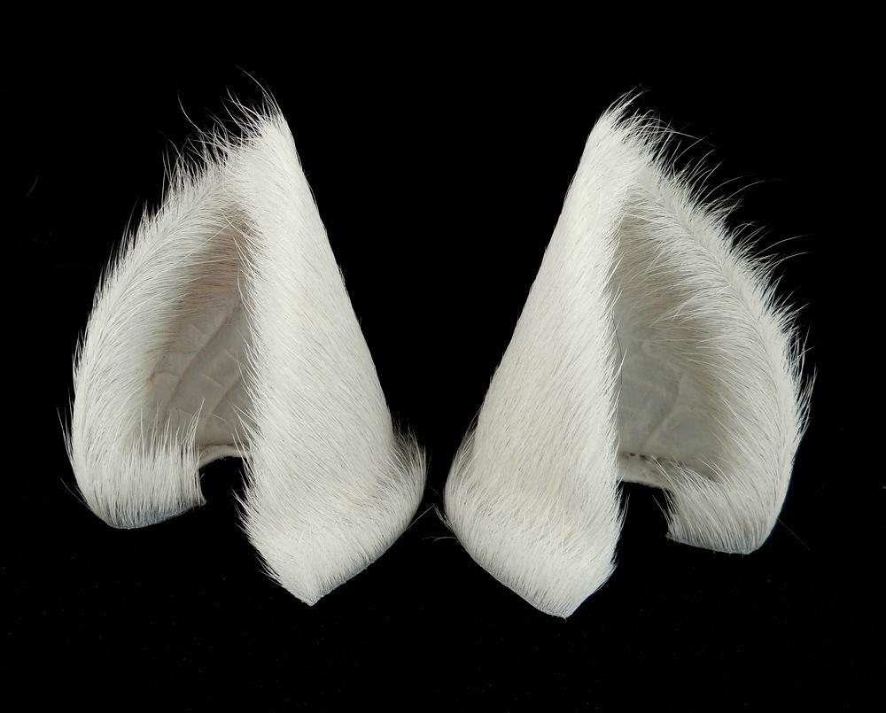 Where Can I Buy Cat Ears