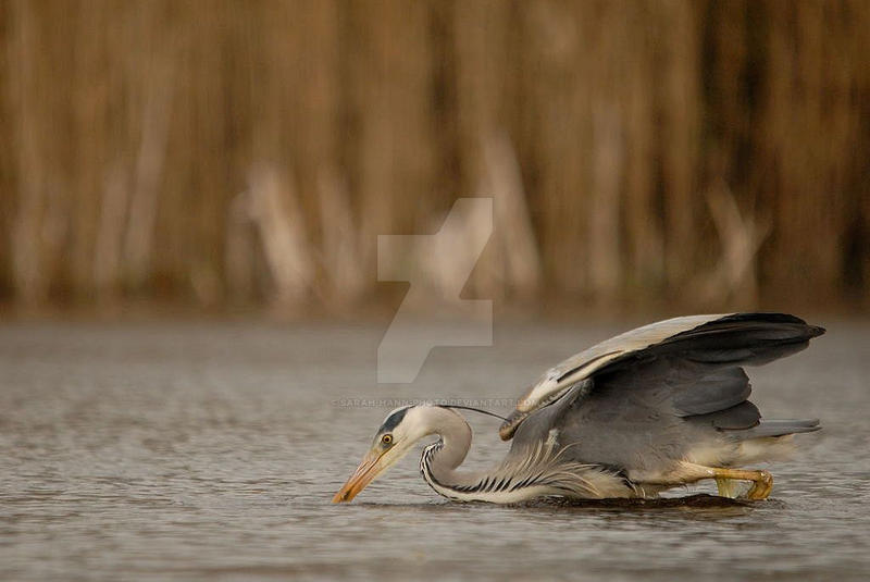 The Catch by Sarah-Hann-photo