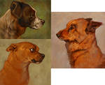 'Oil Painted' Pet Portraits