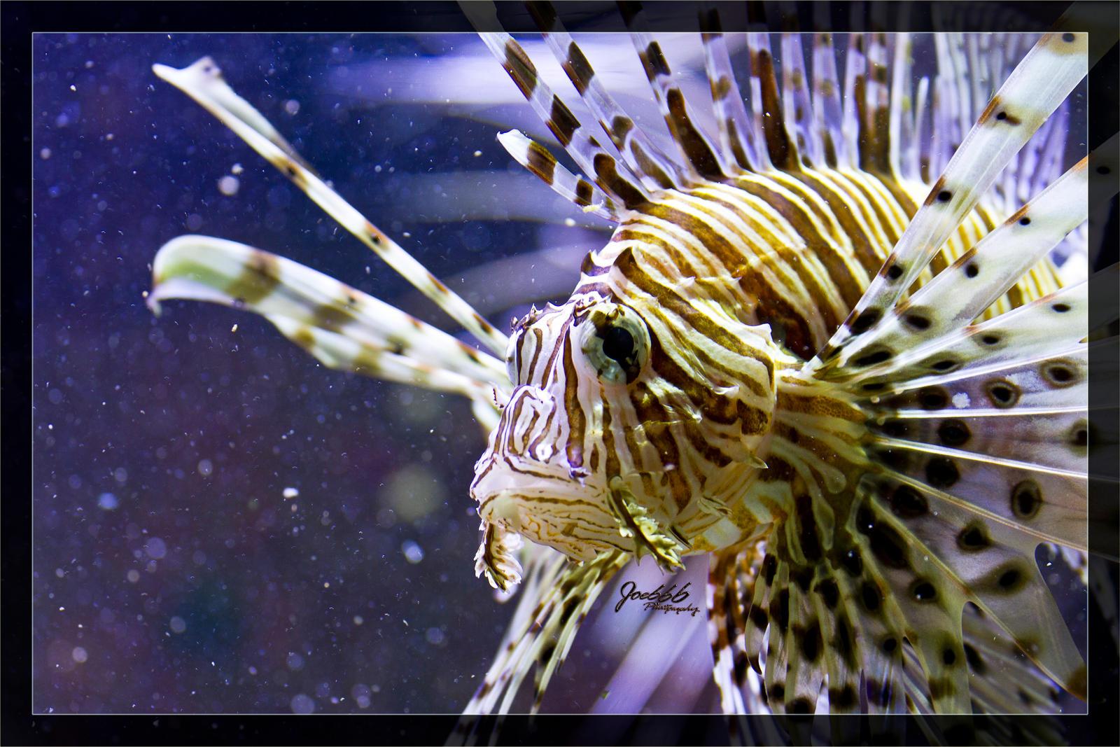 Fire-fish closeup by deaconfrost78