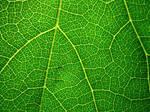 Nature's Network by Bishy-Waya