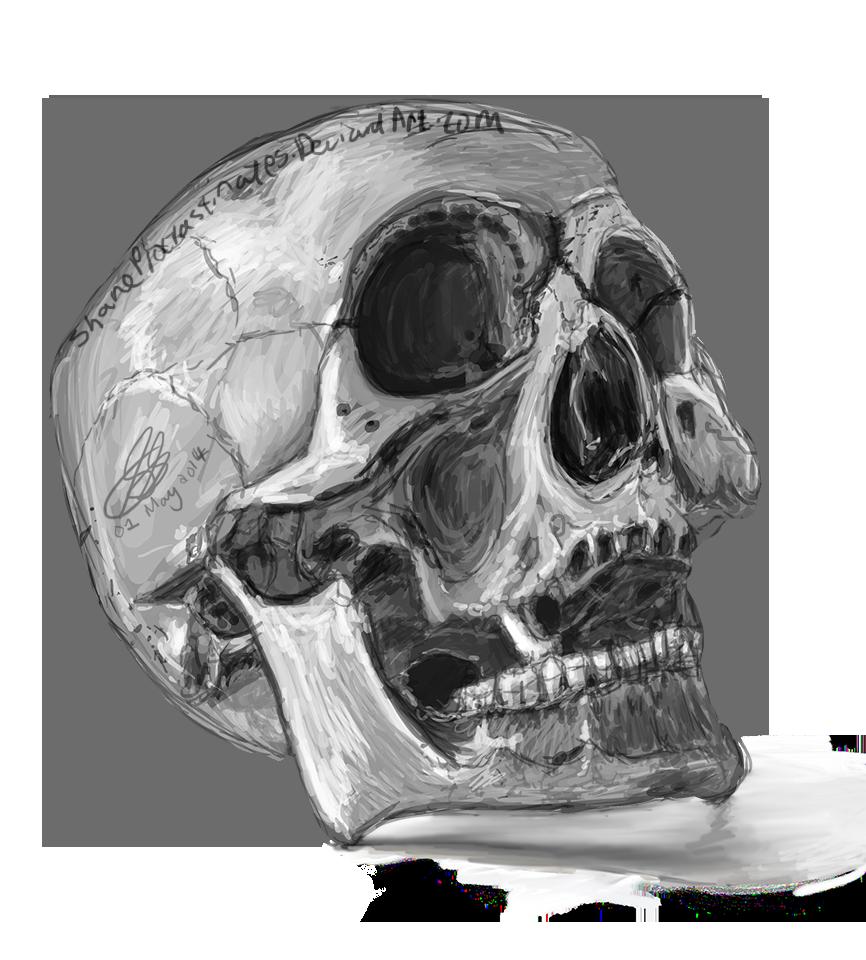 Day 28 - Skull Study by ShaneProcrastinates