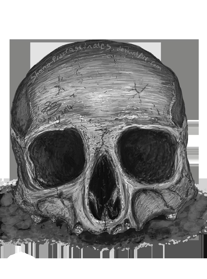 Day 29 - Upper Skull Study by ShaneProcrastinates