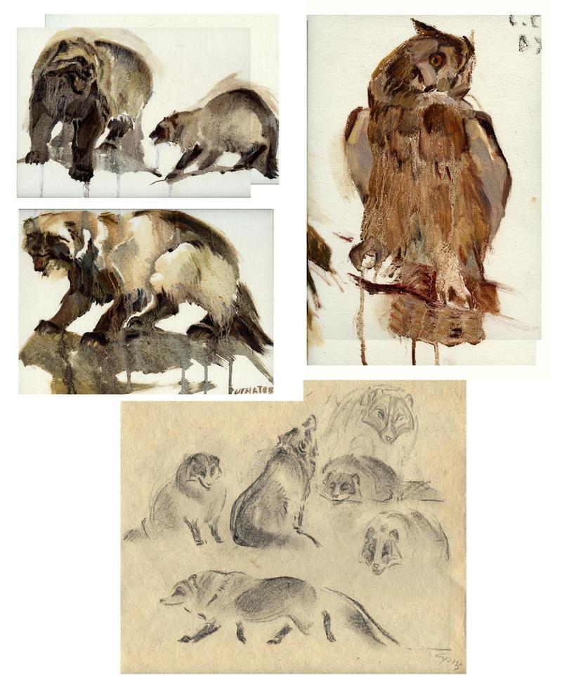 Animal etude by Unita-N