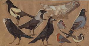 SFA: Birds list