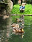 child and ducks