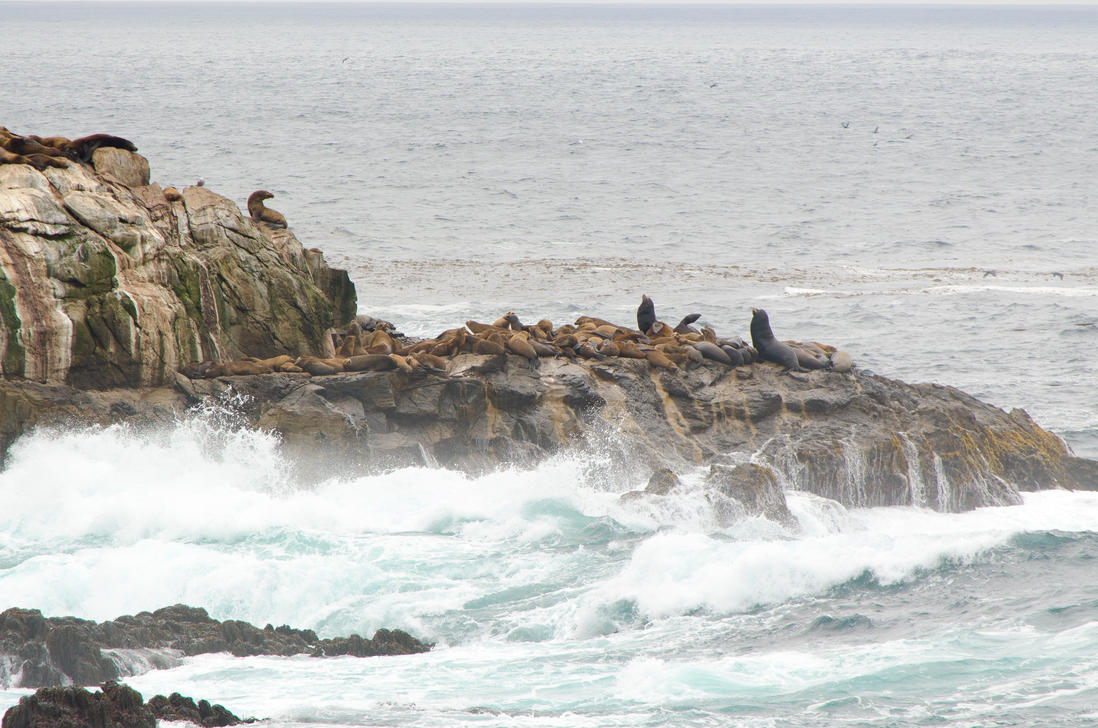 Sea Lions at Point Lobos by the3dman