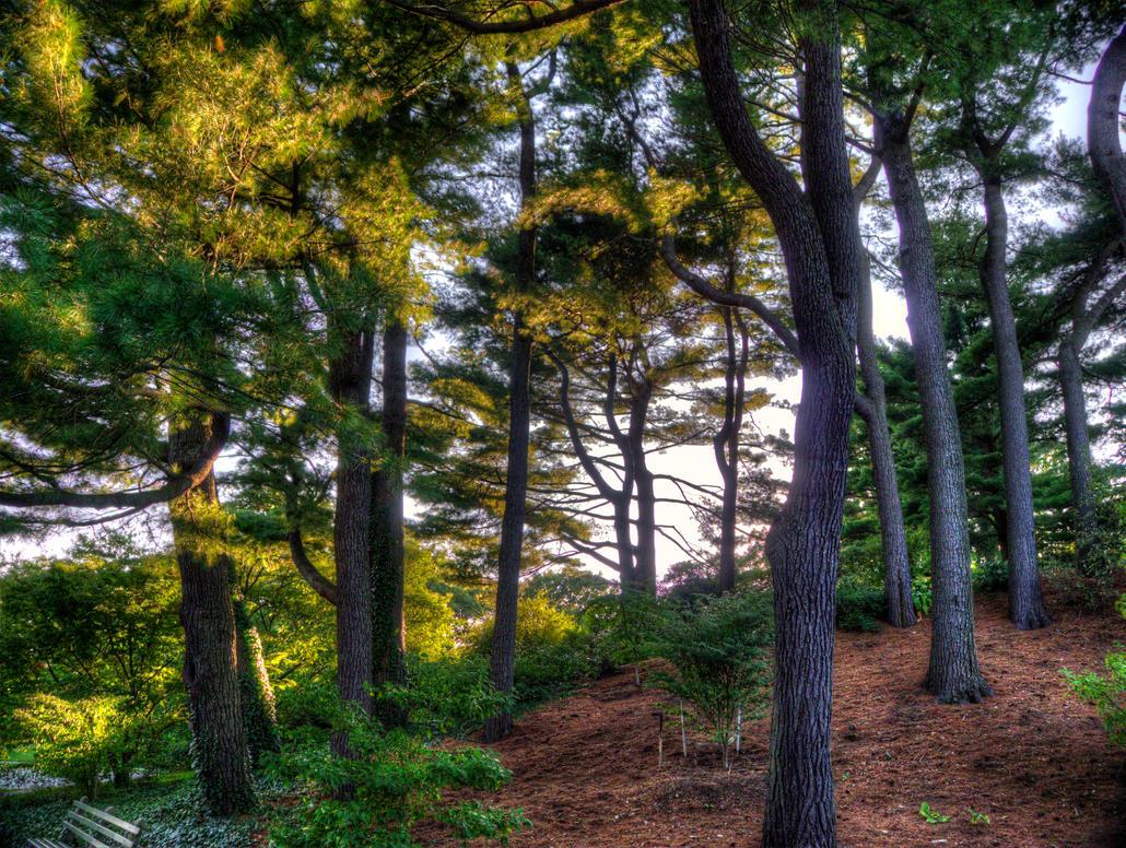 Arnold Arboretum by the3dman