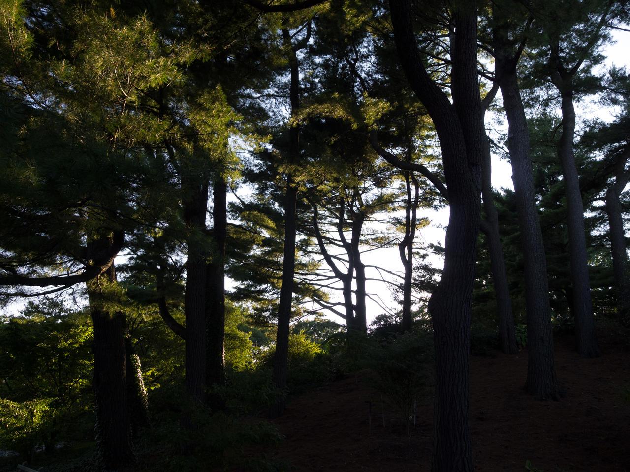 Arnold Arboretum 2 by the3dman