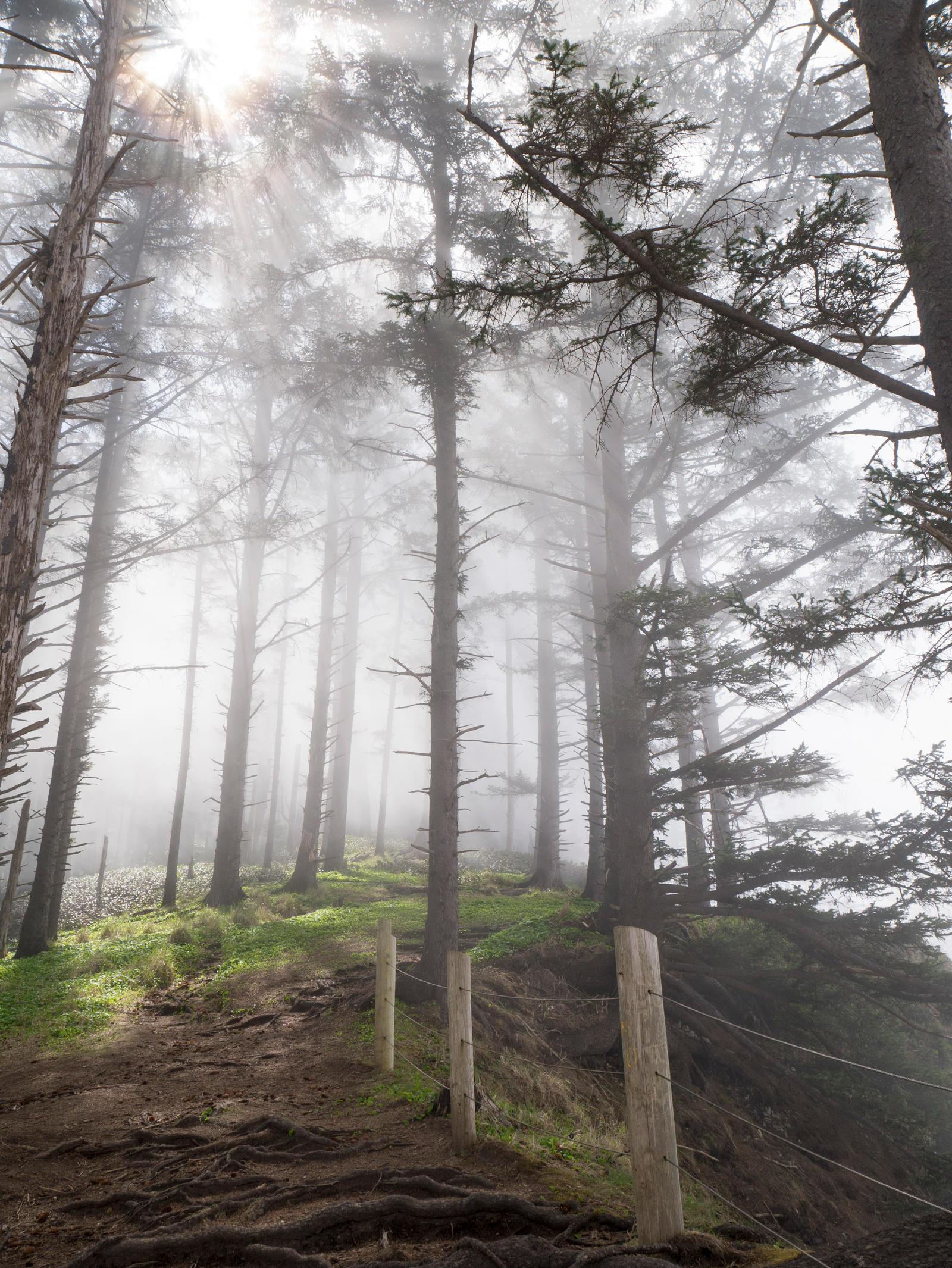 Misty Trail by the3dman