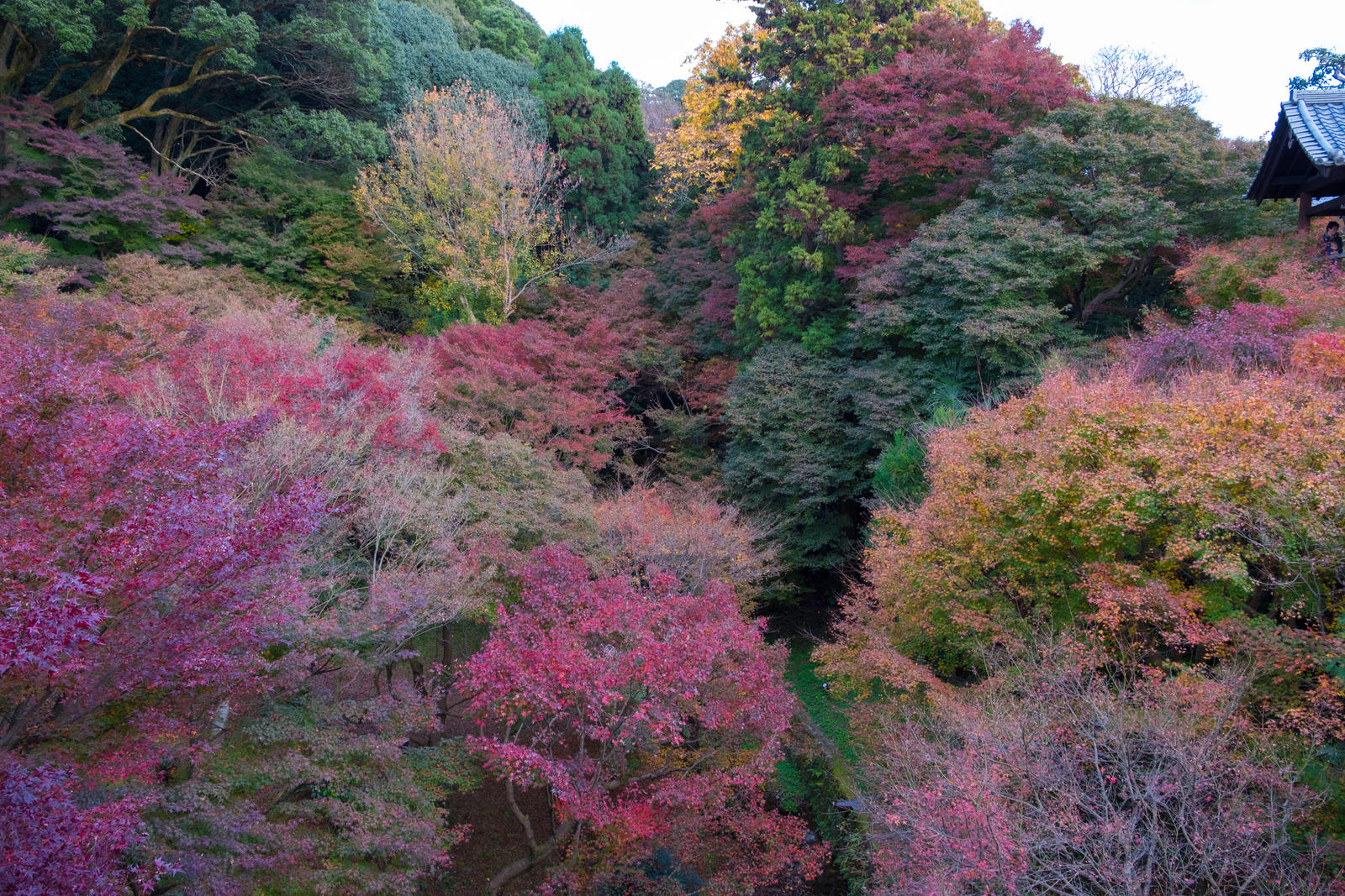 Fall in Kyoto by the3dman
