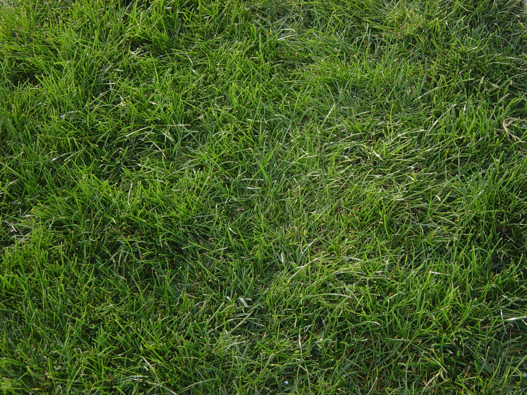 tall grass texture seamless. Unique Tall Grass Textures Texturelib Tall Texture Seamless  With Tall Grass Texture Seamless T
