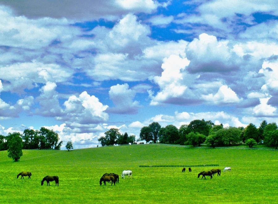 O konjičkom klubu Horses_grazing_under_big_sky_by_znkf0908-d52niop