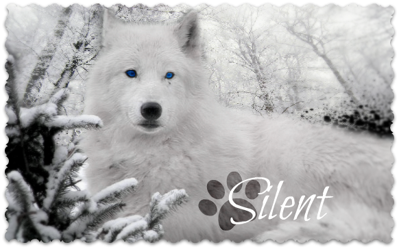 White wolf wallpaper with blue eyes - photo#8