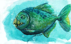 Parrot-toothed Piranha