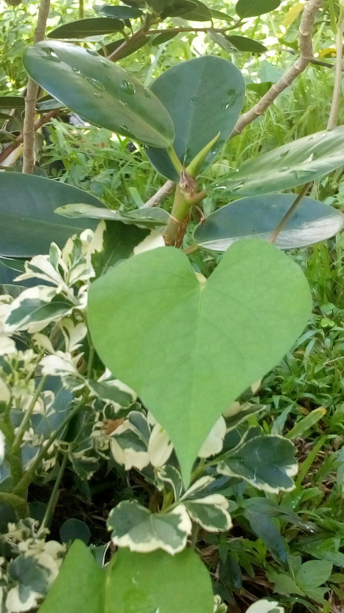 Leaf Heart by Azulors