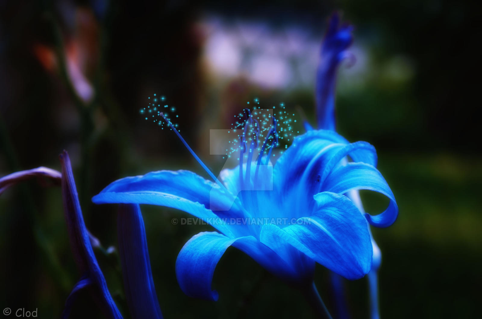 Magic flower by devilkkw on DeviantArt