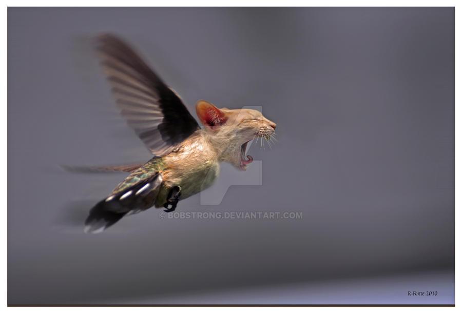 CatBird by bobstrong