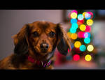 Christmas Dog... by HeezDedJim