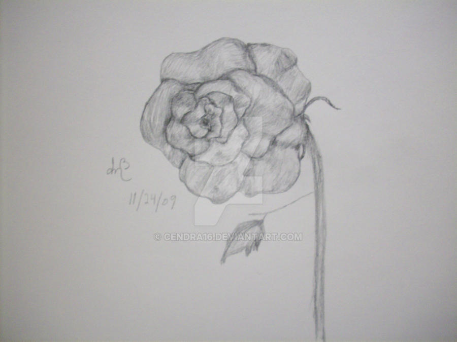 Rose by Cendra16