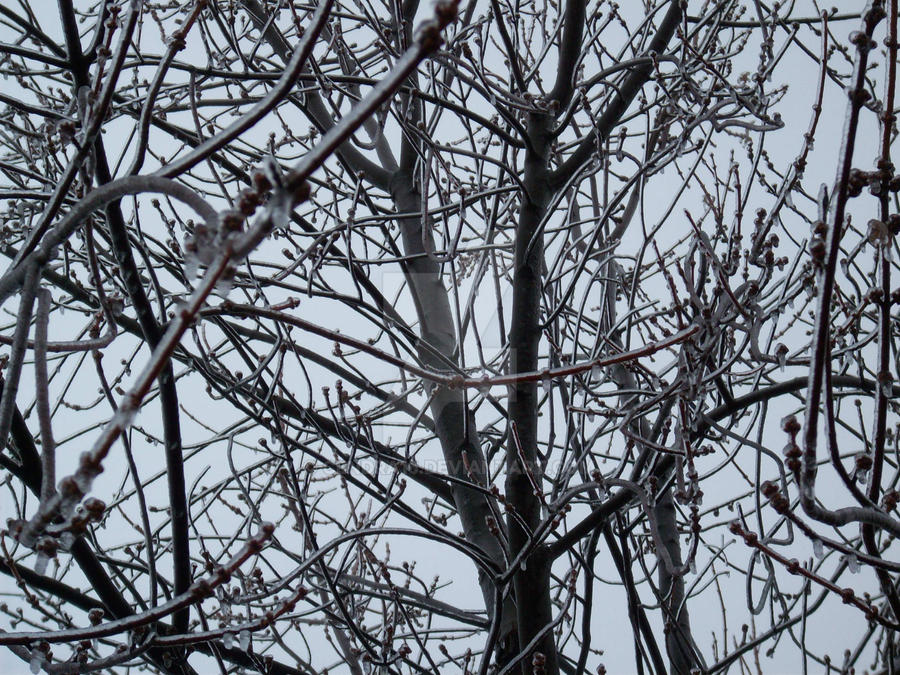 The Silver Tree by Cendra16