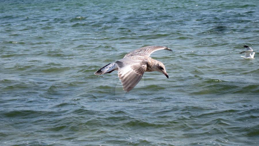 Water Bird by Cendra16