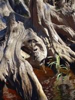 Conversation with Tree Spirit