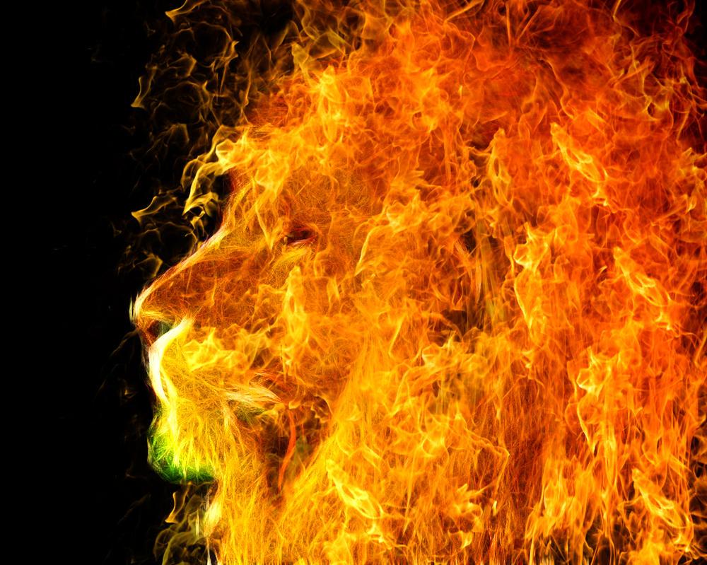 Fire Lion Wallpaper | www.imgkid.com - The Image Kid Has It!