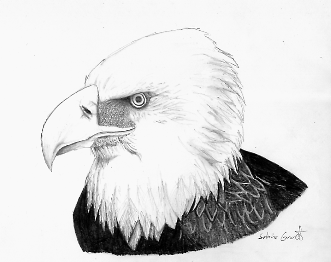 Eagle by Rhay-Robotnik