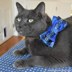 Earl Space Cat