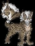 Bobcat Adopt Auction: CLOSED
