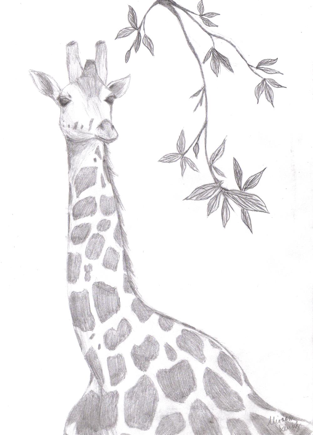 Giraffe - Scanned version