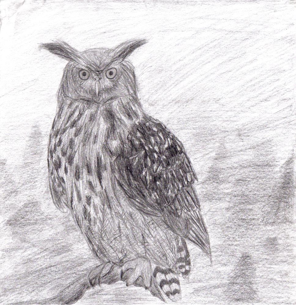 Uhu - Eagle owl