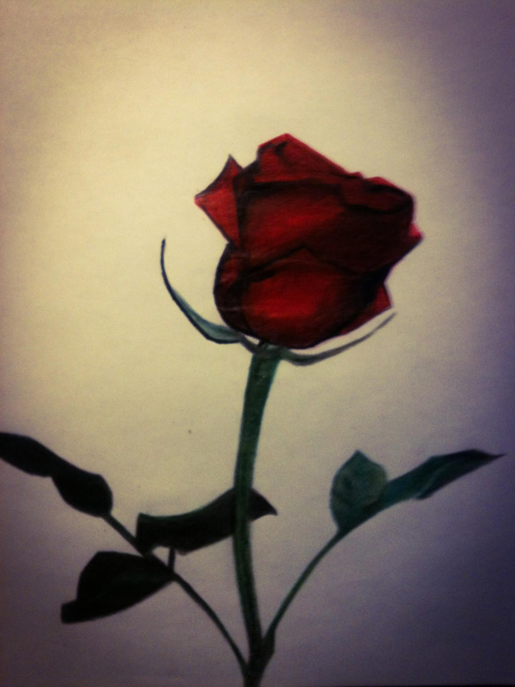 Rose drawing by evelynsixx