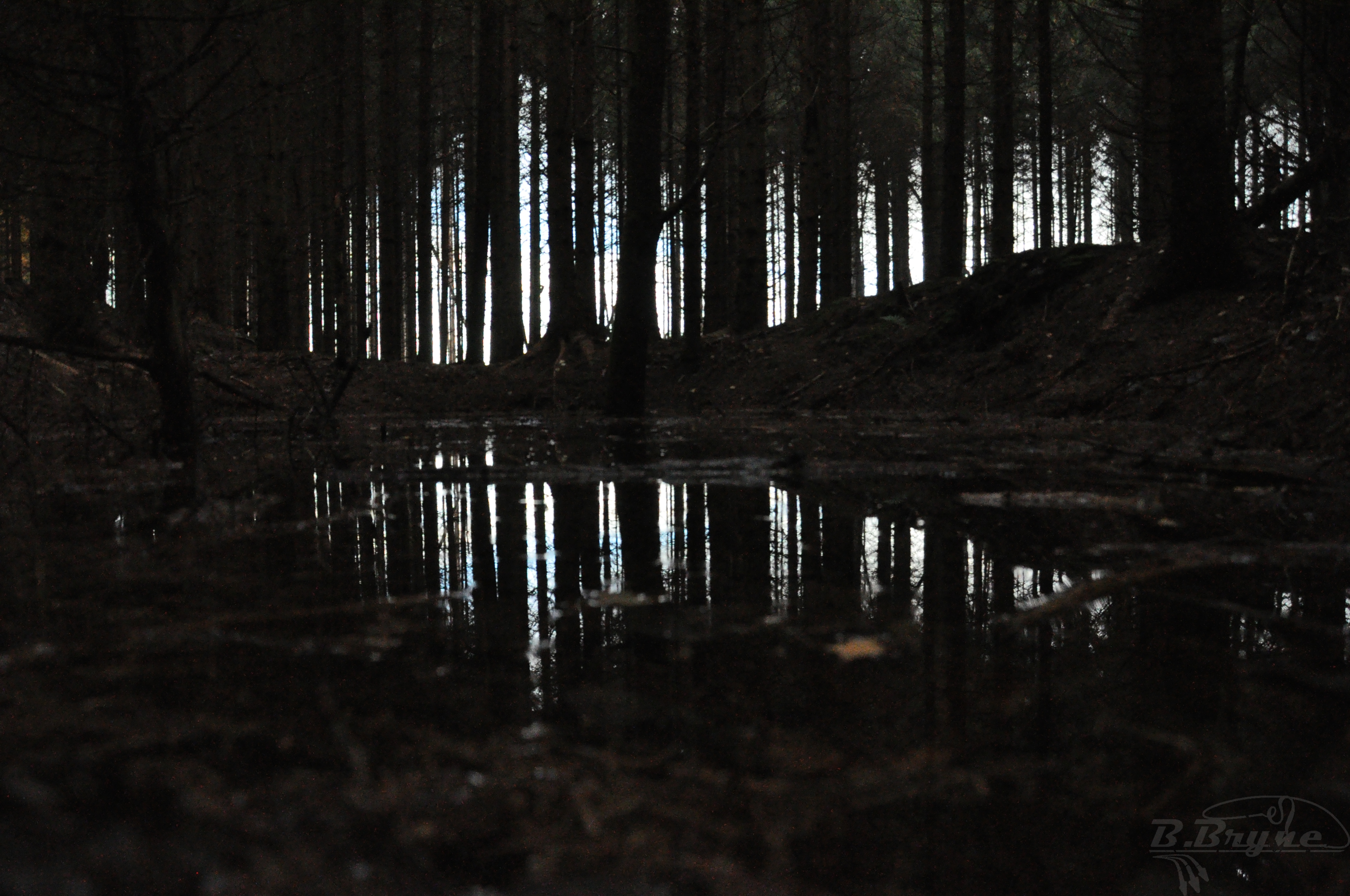Forrest reflection by Brynedude