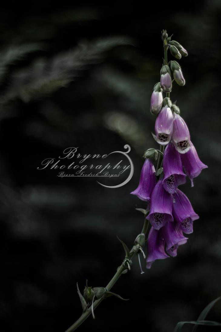 Foxglove by Brynedude