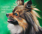 Reilly by cheetahspirit