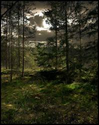 Background - Woods