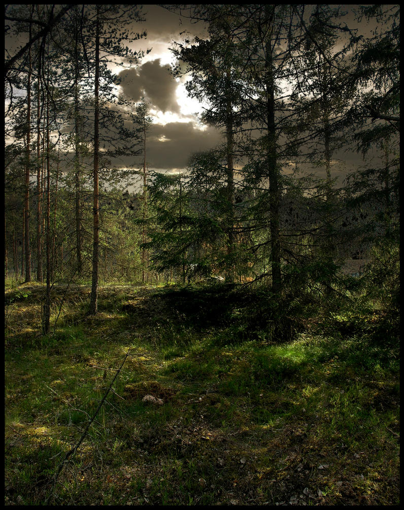 Background - Woods by Eirian-stock