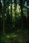 BG Forest