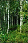 BG Birch Grove II