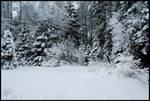 Winter Wonders VIII