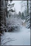 Winter Wonders IX