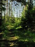 BG Forest Path
