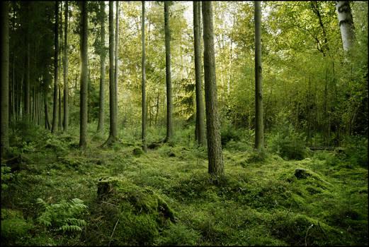 BG Green Woods by Eirian-stock