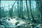BG Shady Grove