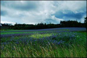 BG Fields Of Blue by Eirian-stock