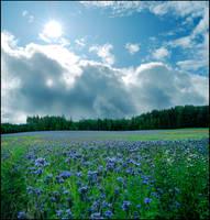 BG Summer Day's Dream by Eirian-stock